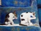 Toilette de chats