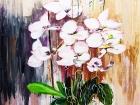 Orchidées en pots